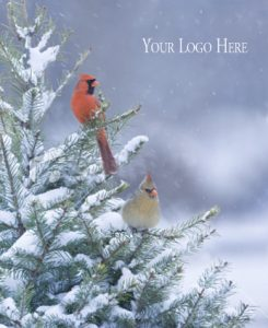 12 – Winter Cardinals